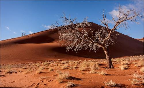 Red Dune And Tree, Namibia by Dave Young (10)