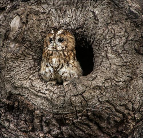 Owl by Sue Young (9)